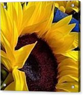 Sunflower Sunny Yellow In New Orleans Louisiana Acrylic Print