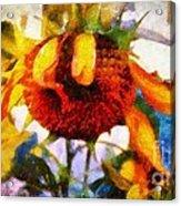 Sunflower Tender Acrylic Print