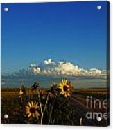 Sunflower Views Acrylic Print