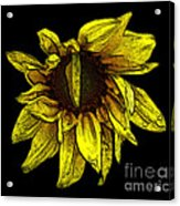 Sunflower With Contours Effect Acrylic Print