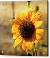 Sunflower With Texture Acrylic Print
