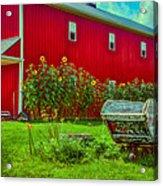 Sunflowers Beside A Big Red Barn Acrylic Print