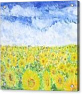 Sunflowers In A Field In  Texas Acrylic Print