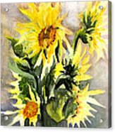 Sunflowers In Abstract Acrylic Print