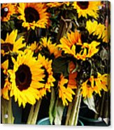 Sunflowers In Blue Bowls Acrylic Print