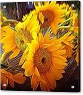 Sunflowers In December Acrylic Print