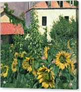 Sunflowers In The Garden At Petit Gennevilliers  Acrylic Print