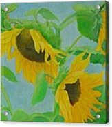 Sunflowers In The Wind 2 Acrylic Print