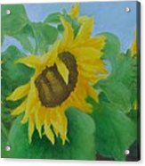 Sunflowers In The Wind Colorful Original Sunflower Art Oil Painting Artist K Joann Russell           Acrylic Print