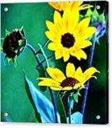 Sunflowers Portrait Acrylic Print
