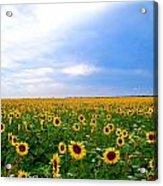 Sunflowers Acrylic Print by Thomas Leon