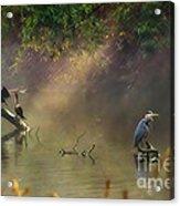 Sunglow Heron Acrylic Print