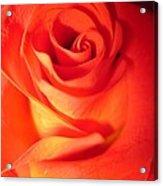 Sunkissed Orange Rose 10 Acrylic Print
