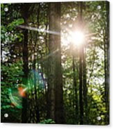 Sunlight Forest Acrylic Print