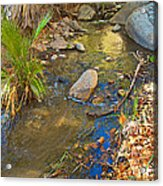 Sunlight On Andreas Creek In Indian Canyons-ca Acrylic Print