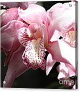Sunlight On Pink Orchid Acrylic Print
