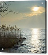 Sunlight On The Lake With Pampas Grass Acrylic Print