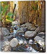 Sunlight Over Rocky Andreas Creek In Indian Canyons-ca Acrylic Print
