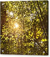 Sunlight Shining Through A Forest Canopy Acrylic Print