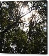 Sunlight Through Branches I Acrylic Print