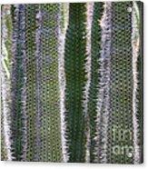 Sunlight Through Cacti Acrylic Print
