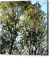 Sunlit 14-1 Acrylic Print