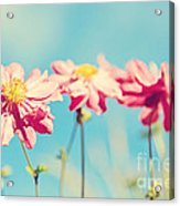 Sunlit Anemone Flowers With Cross Processed Effect Acrylic Print