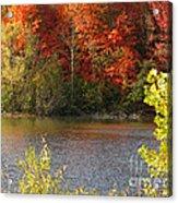 Sunlit Autumn Acrylic Print