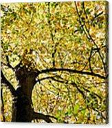 Sunlit Autumn Tree Acrylic Print by Natalie Kinnear