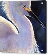Sunlit Egret Acrylic Print
