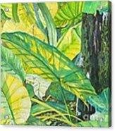Sunlit Elephant Ears Acrylic Print