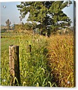 Sunlit Fence Posts In Weeds Acrylic Print