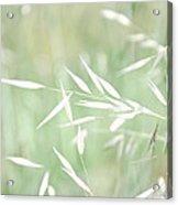Sunlit Grass Acrylic Print