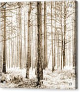 Sunlit Hazy Trees In Neutral Colors Acrylic Print