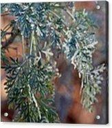 Sunlit Herb Acrylic Print