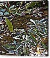 Sunlit Mountain Laurel Acrylic Print by JW Hanley
