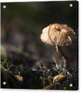 Sunlit Mushroom Acrylic Print
