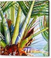 Sunlit Palm Fronds Acrylic Print