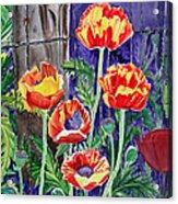 Sunlit Poppies Acrylic Print