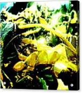Sunlit Seaweed Acrylic Print