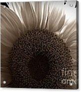 Sunlit Sepia Acrylic Print