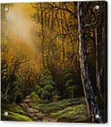 Sunlit Trail Acrylic Print