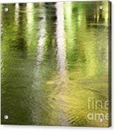 Sunlit Tree Reflections Acrylic Print