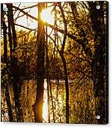 Sunlit Trees  Acrylic Print