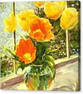 Sunlit Tulips Acrylic Print by Madeleine Holzberg