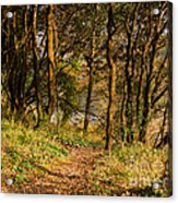 Sunlit Woods In Late Autumn Acrylic Print