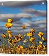 Sunlit Yellow Wildflowers Acrylic Print