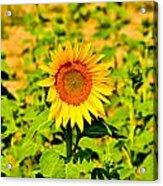 Sunny Acrylic Print by BandC  Photography