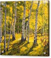 Sunny Birch Acrylic Print