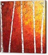 Sunset Birches Acrylic Print